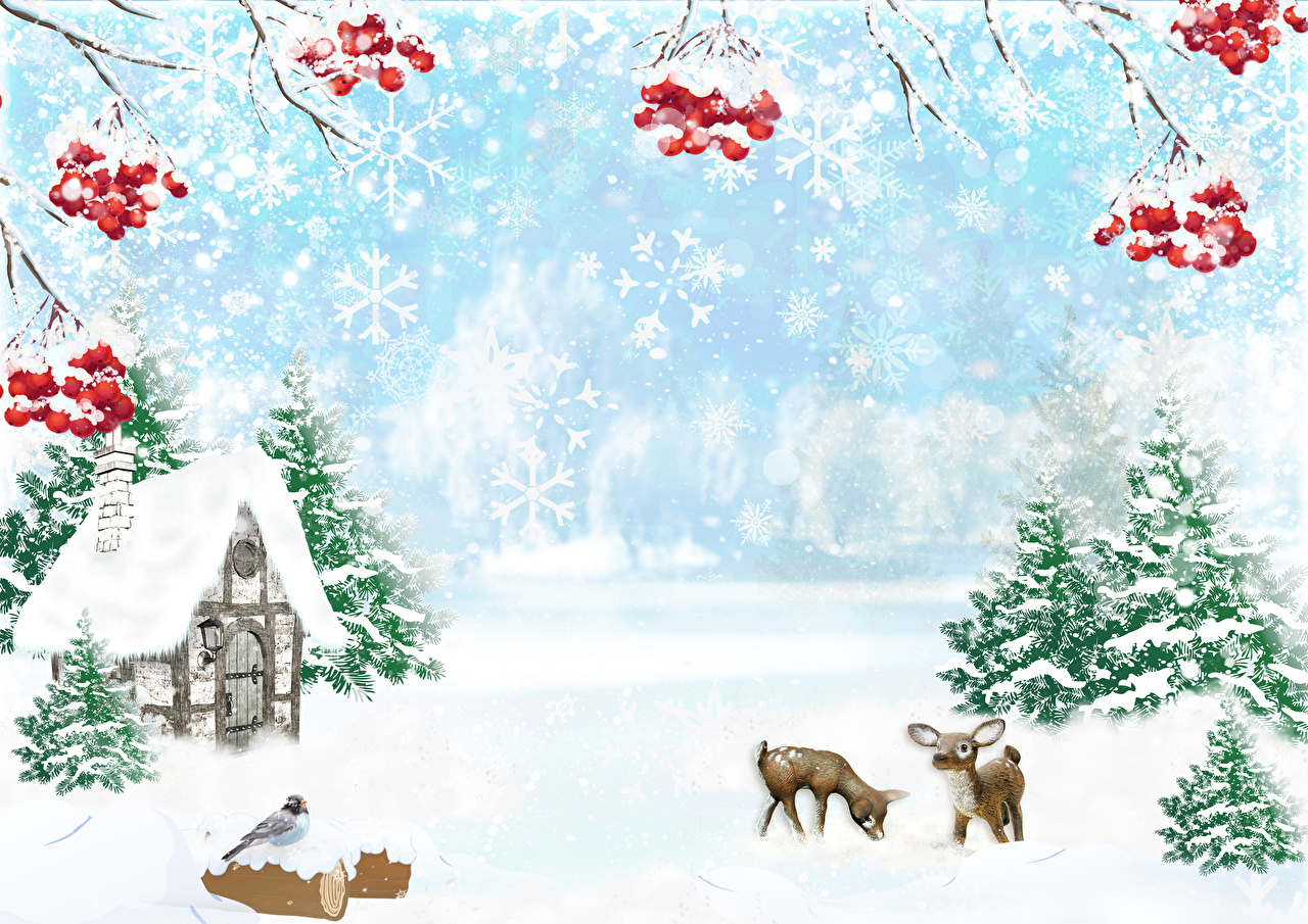 Fotos Hirsche Vögel Natur Winter Fichten Mehlbeeren Ast Beere Haus Vogel Eberesche Vogelbeeren Gebäude