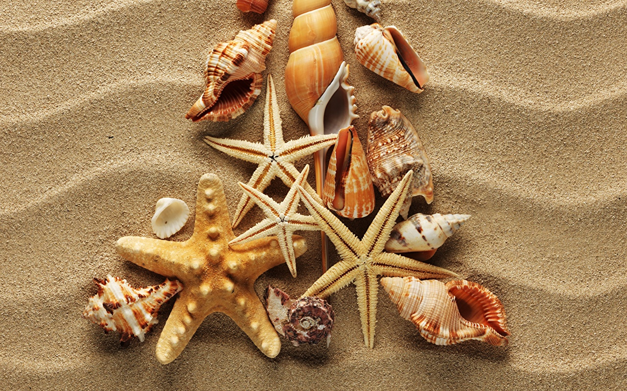 Desktop Wallpapers sea stars Nature Sand Shells Closeup Starfish