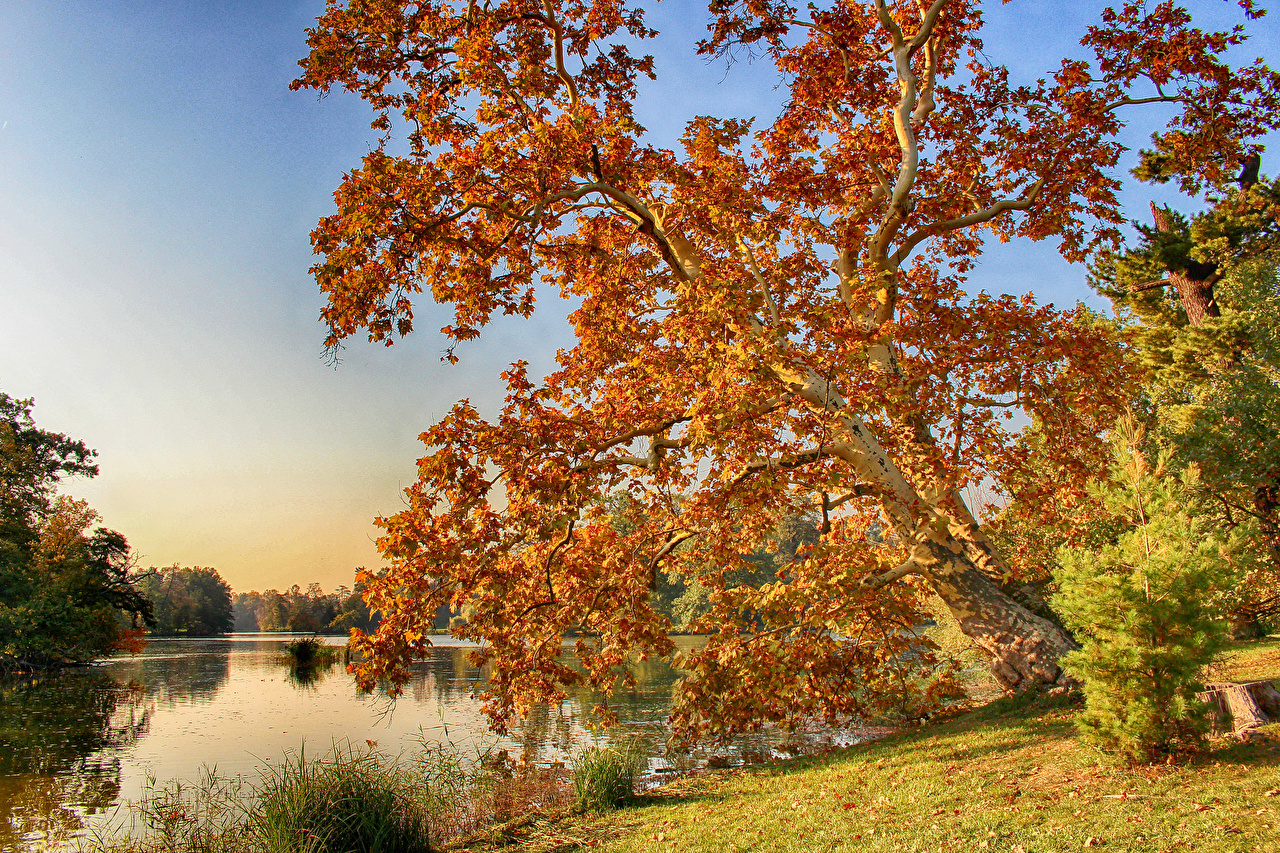 Pictures Czech Republic Lednice Autumn Nature river Trees Rivers