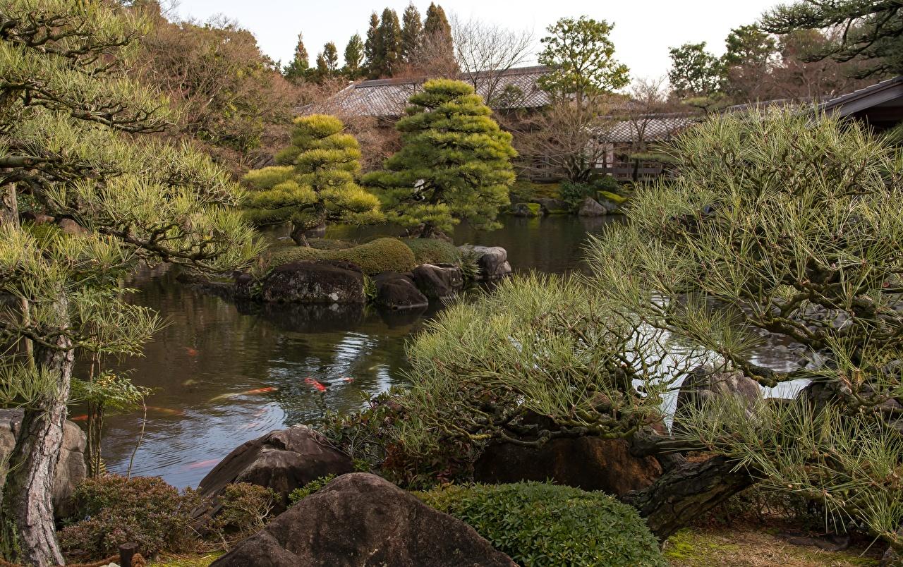 Picture Japan Koko-en garden, Himeji Pond Gardens stone Branches Cities Stones