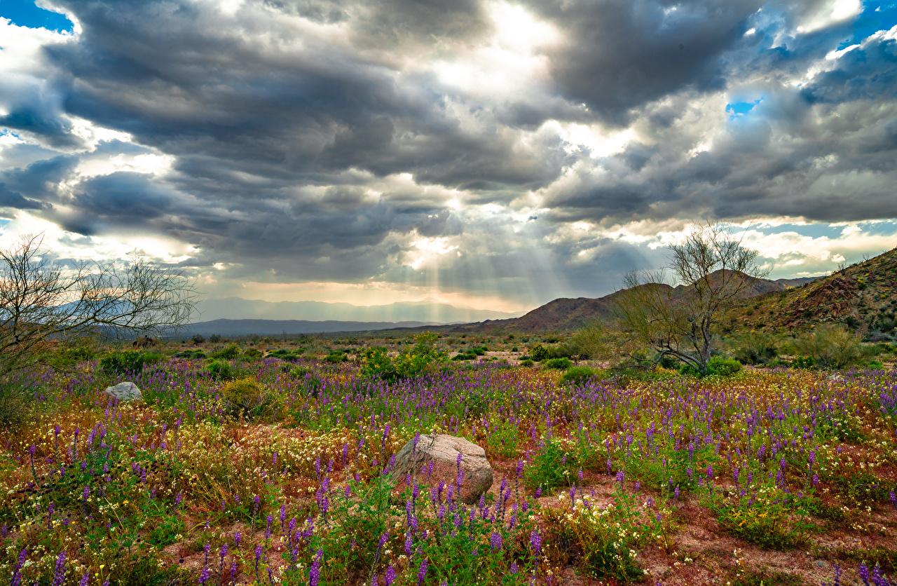 Bilder von Kalifornien USA Joshua Tree National Park, wildflowers Natur Frühling Parks Wolke Vereinigte Staaten Park