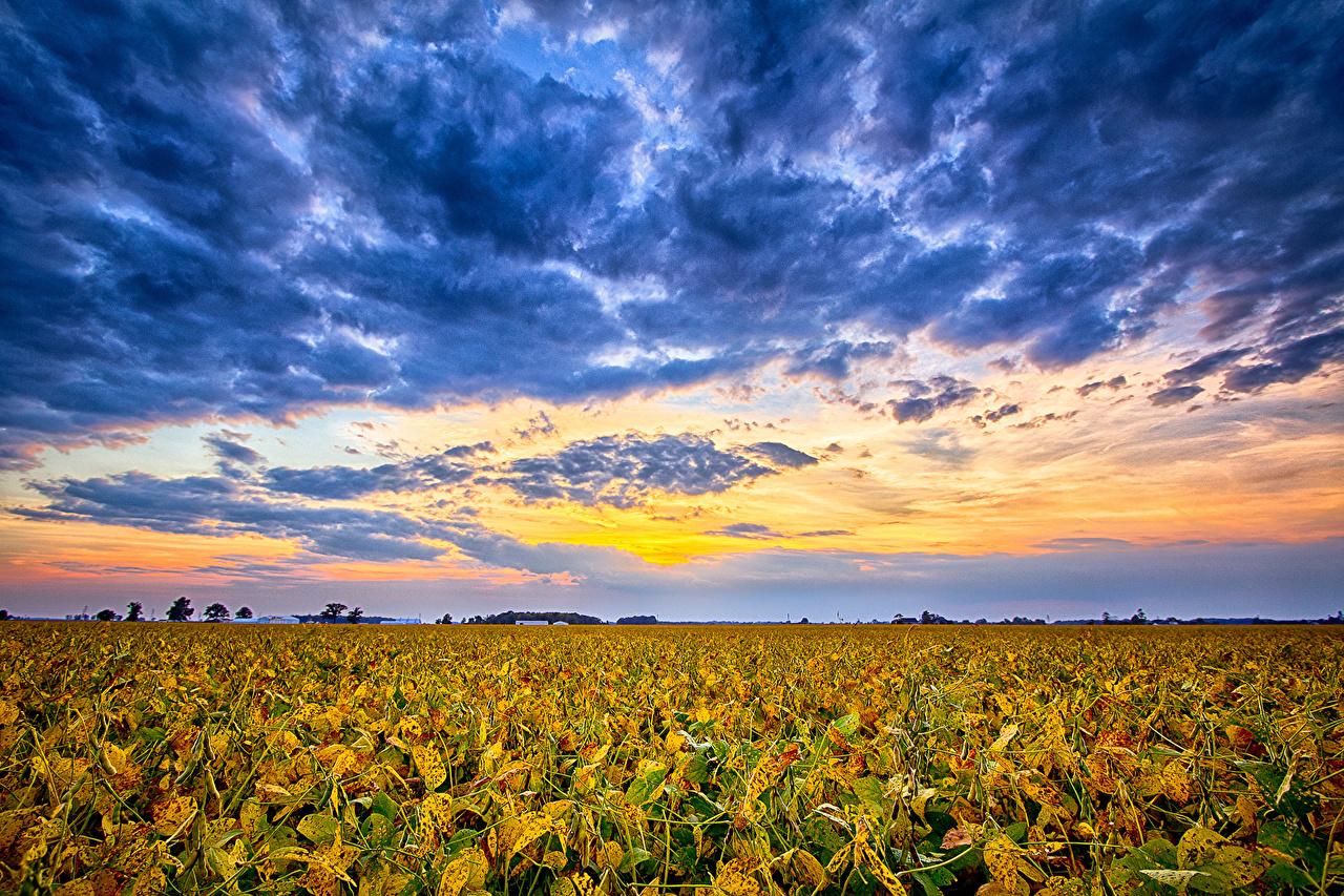 Sfondi USA Indiana Natura Cielo Campo agricolo Nubi stati uniti Nuvole