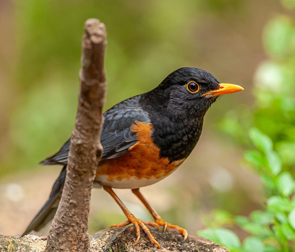 Picture bird Bokeh Animals Closeup Birds blurred background animal