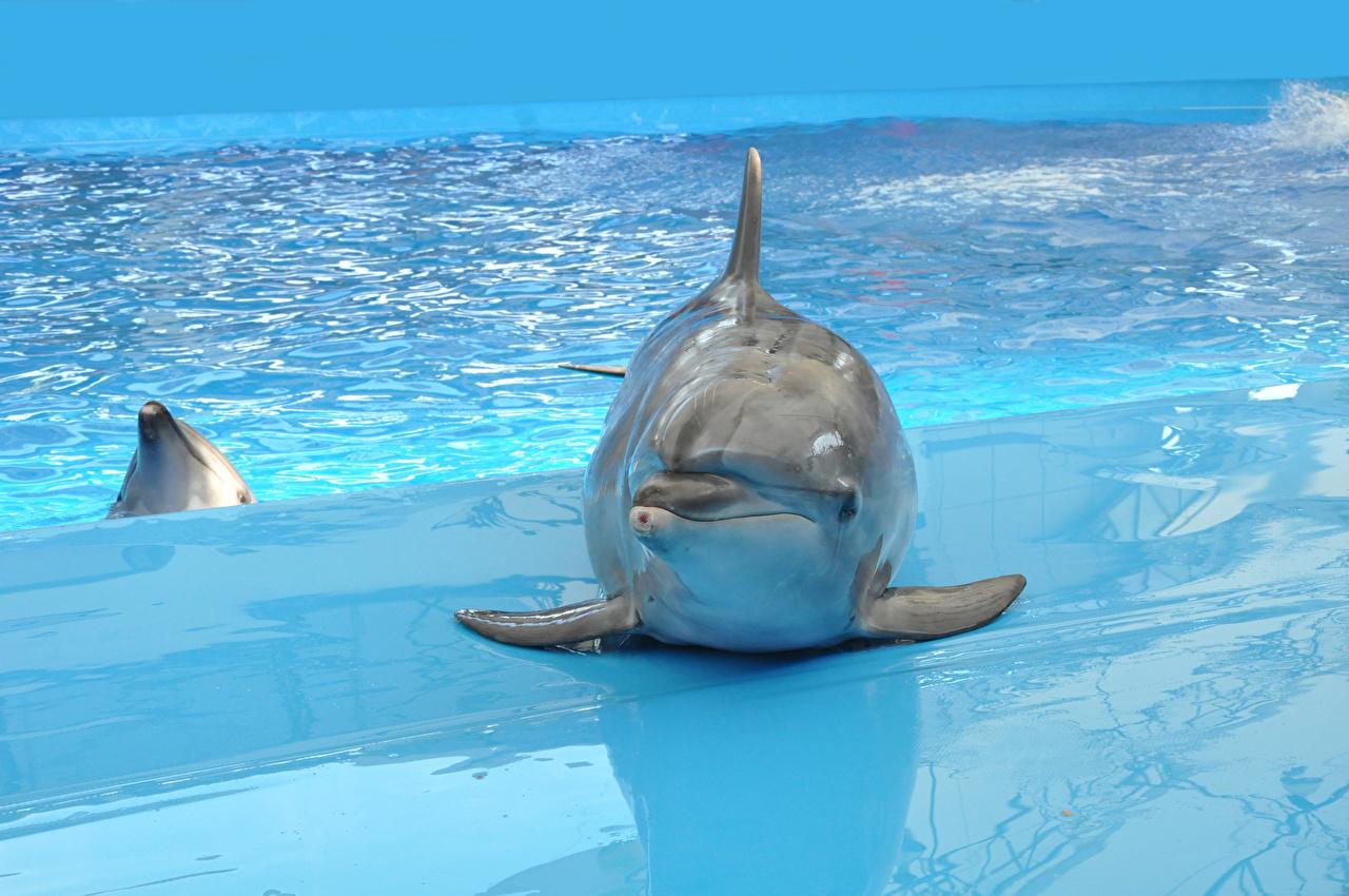 壁紙 イルカ 海 動物 ダウンロード 写真