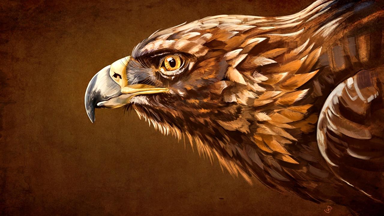 Aguias Desenhado Cabeça Bico animalia, um animal, aquila, águia Animalia