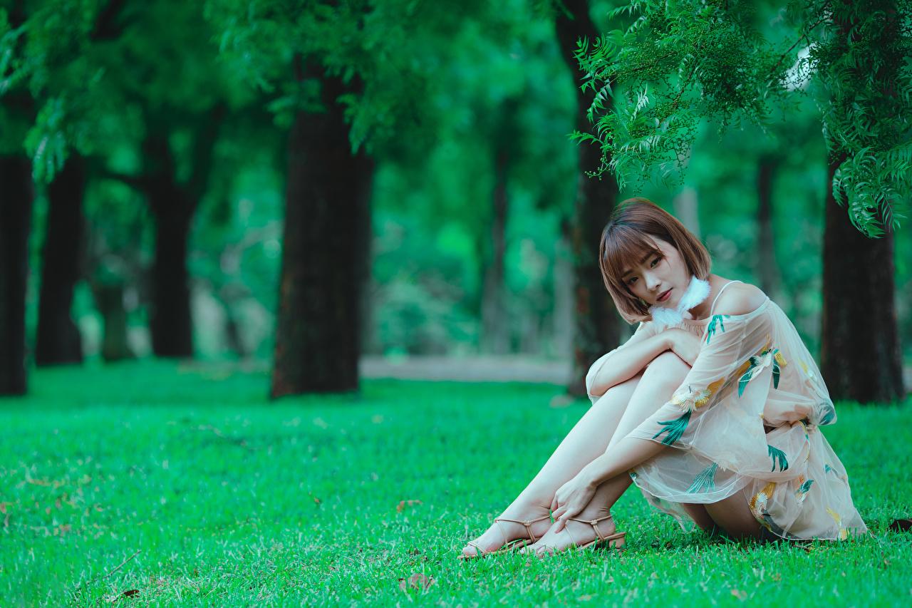 Bilder Mädchens Bein Asiatische Gras Sitzend Kleid junge frau junge Frauen Asiaten asiatisches sitzt sitzen