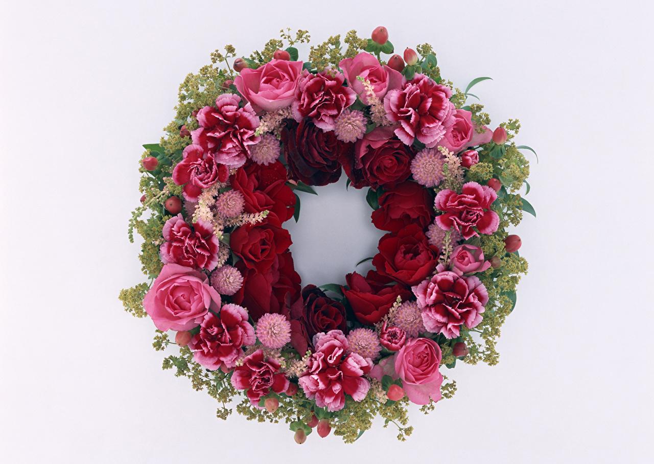 Fotos Rosen Blumen Nelken Weißer hintergrund Design