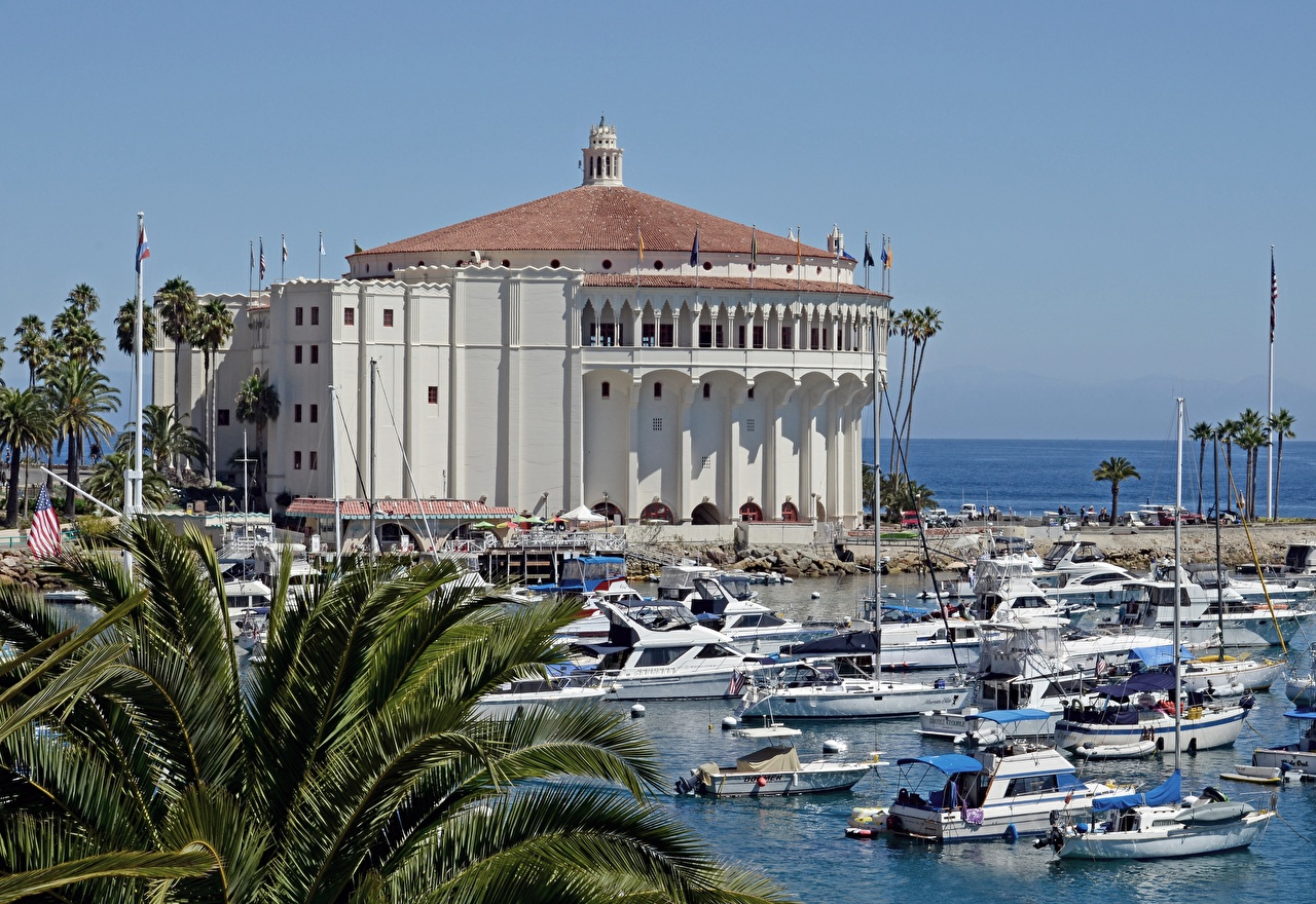 Photo California USA island Santa Catalina, Avalon Palms Motorboat Cities palm trees speedboat powerboat
