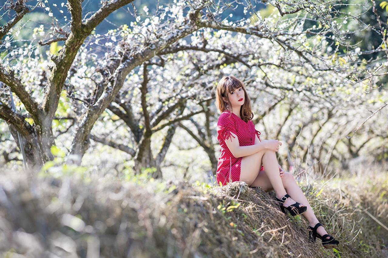 Tapety na pulpit Szatenka Bokeh Dziewczyny Nogi Azjaci siedzą Sukienka Kwitnące drzewa Buty na obcasie brązowowłosa dziewczyna dziewczyna z brązowymi włosami rozmazane tło dziewczyna młoda kobieta młode kobiety azjatycka Siedzi