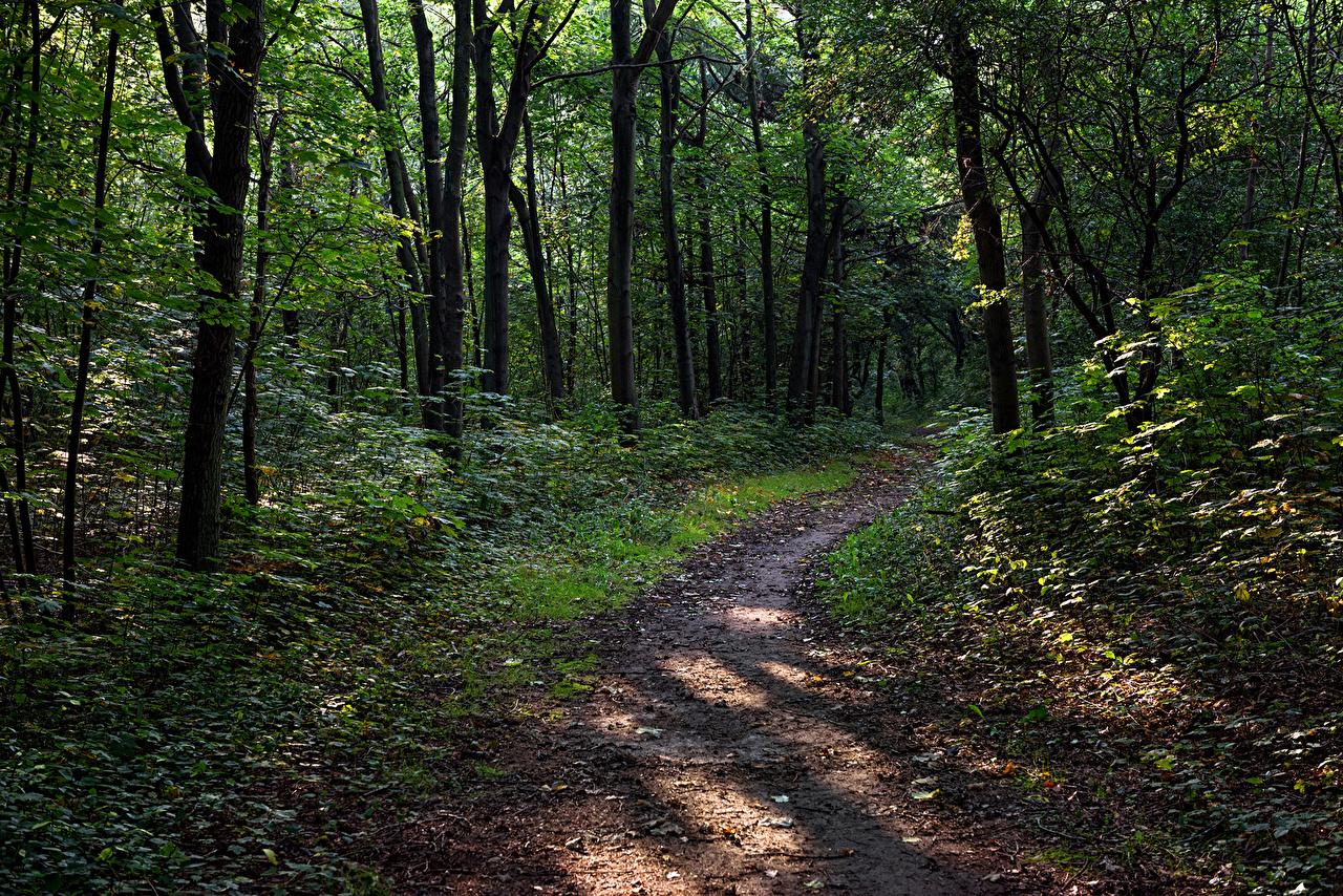 Immagini Natura Autunno Sentiero foresta Alberi Foreste