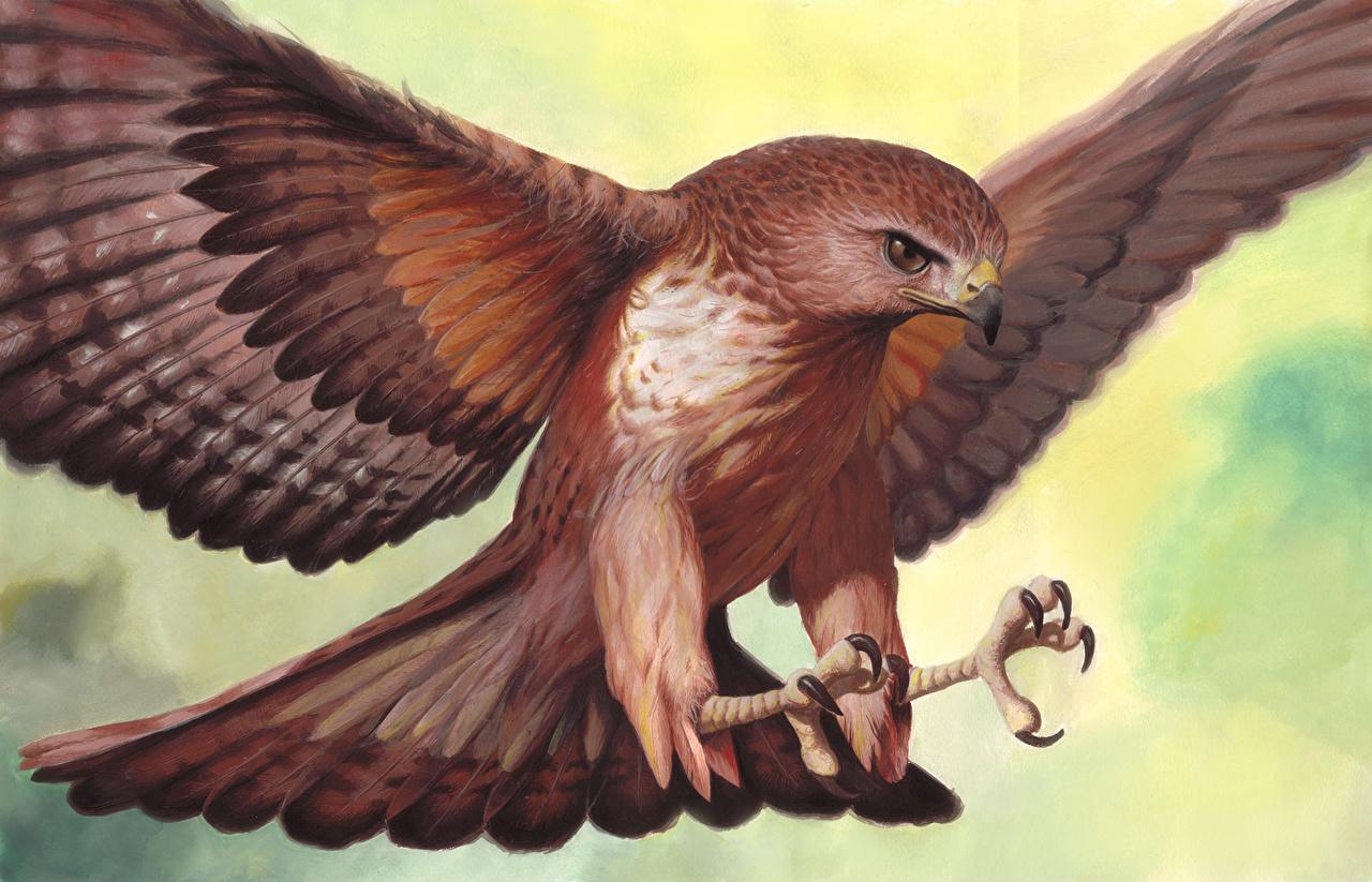 Photos bird Hawk animal Painting Art Birds Animals