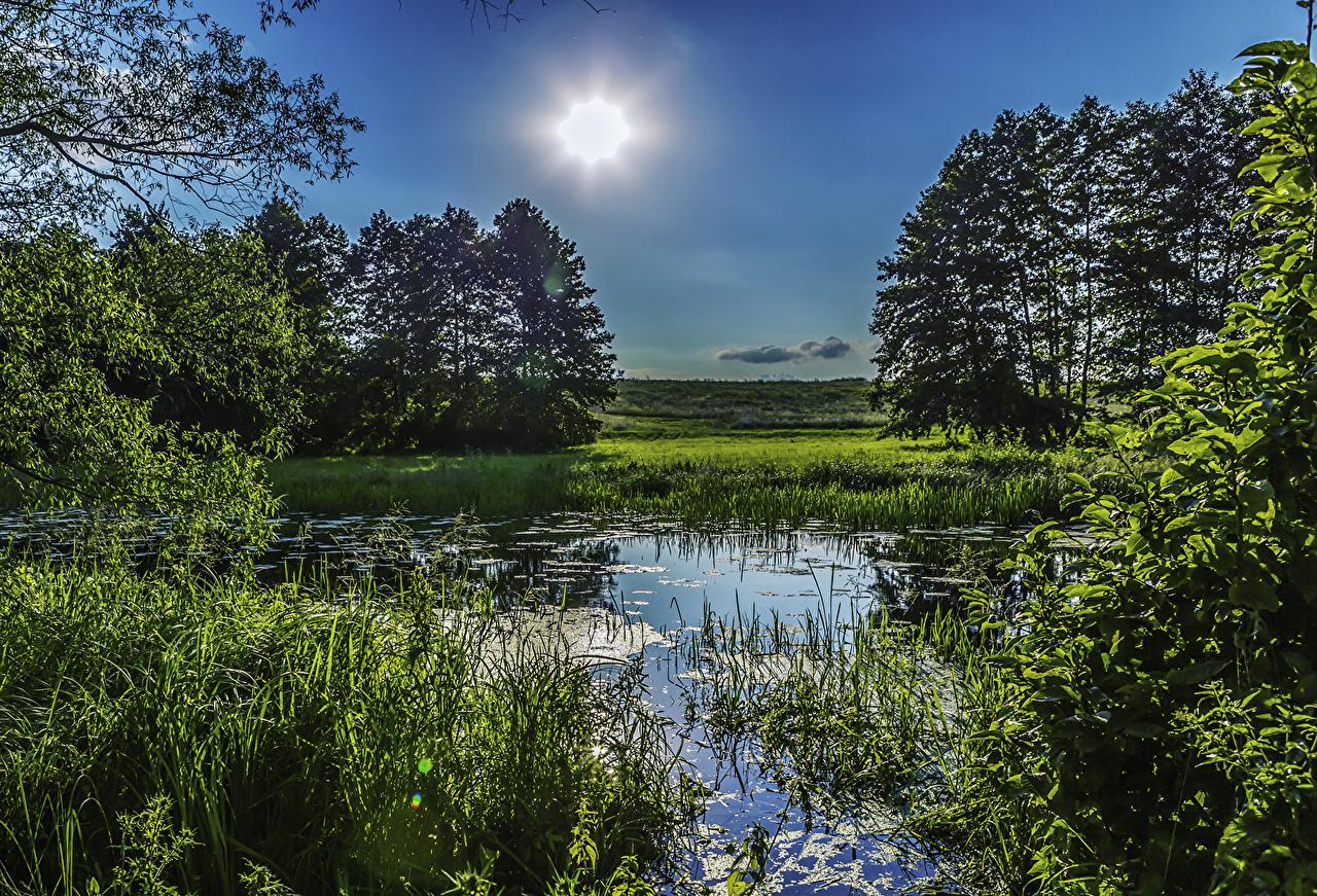 Fotos Ukraine Poltava Natur Sonne Sumpf Gras Bäume