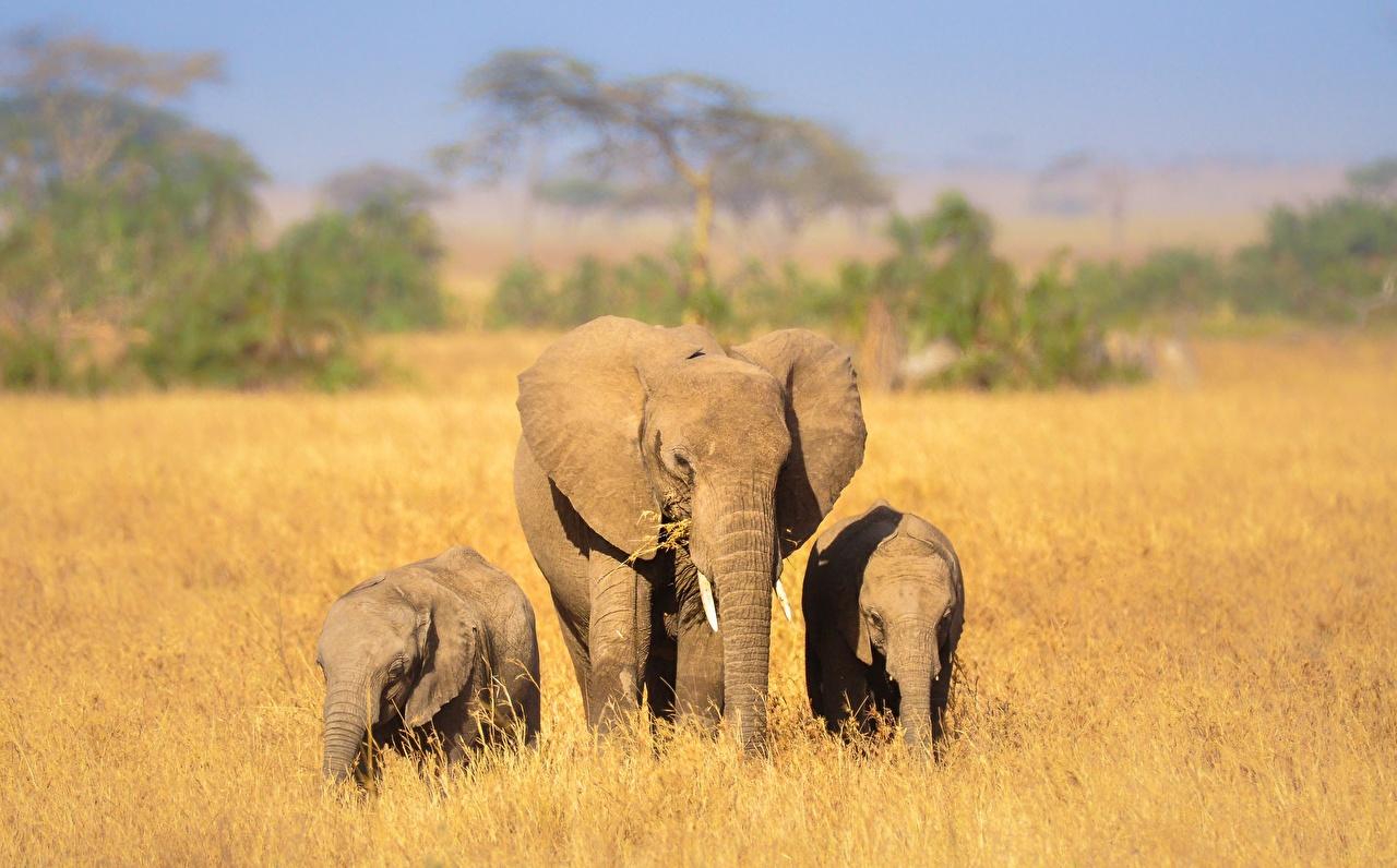Fonds D Ecran Elephant Petits Trois 3 Animaux Telecharger Photo