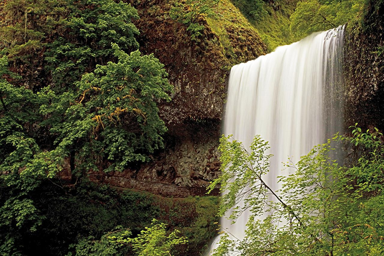 USA Chute d'eau Silver Falls Oregon Arbres États-Unis, cascade Nature