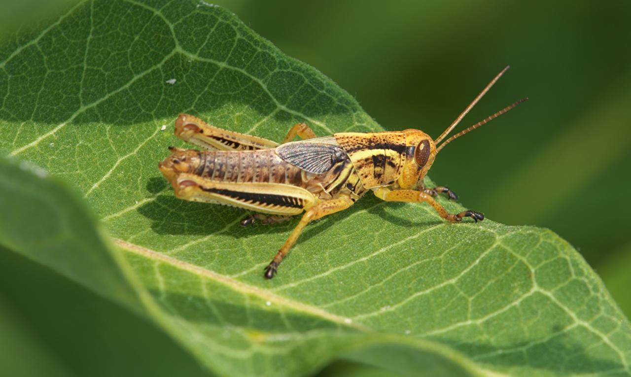 Foto Insekten Heuschrecken Blattwerk ein Tier Großansicht Blatt Tiere hautnah Nahaufnahme