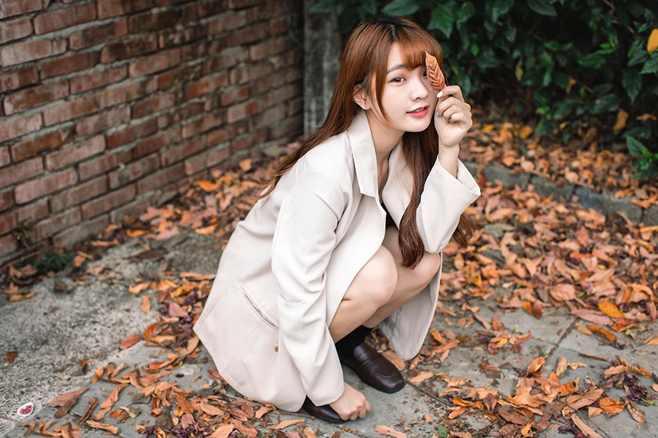 Desktop Hintergrundbilder Blattwerk Braune Haare Mädchens Asiaten Sitzend Sakko Starren Blatt Braunhaarige junge frau junge Frauen Asiatische asiatisches sitzt sitzen Blick