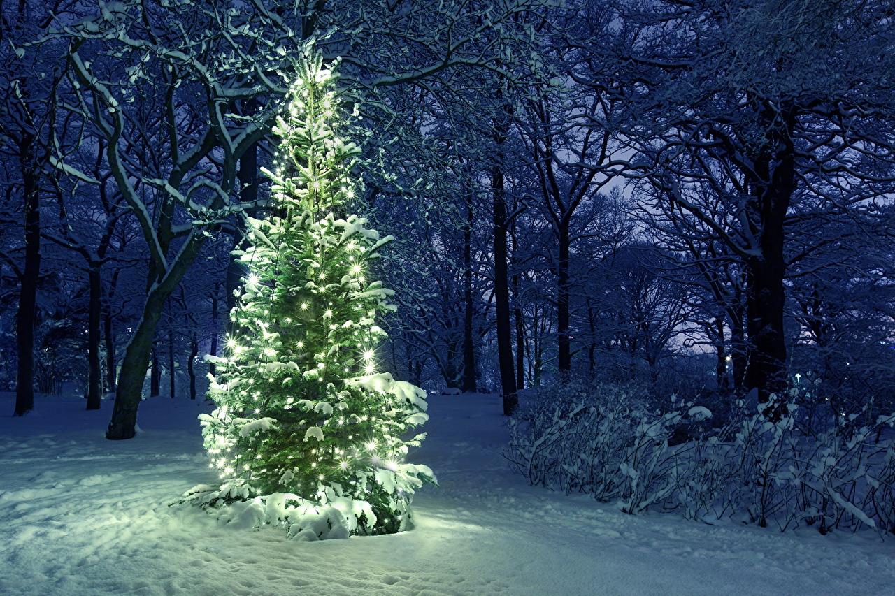 Bakgrunnsbilder Nyttår Natur Vinter Juletre park Snø Julelys Trær Helligdager jul Parker