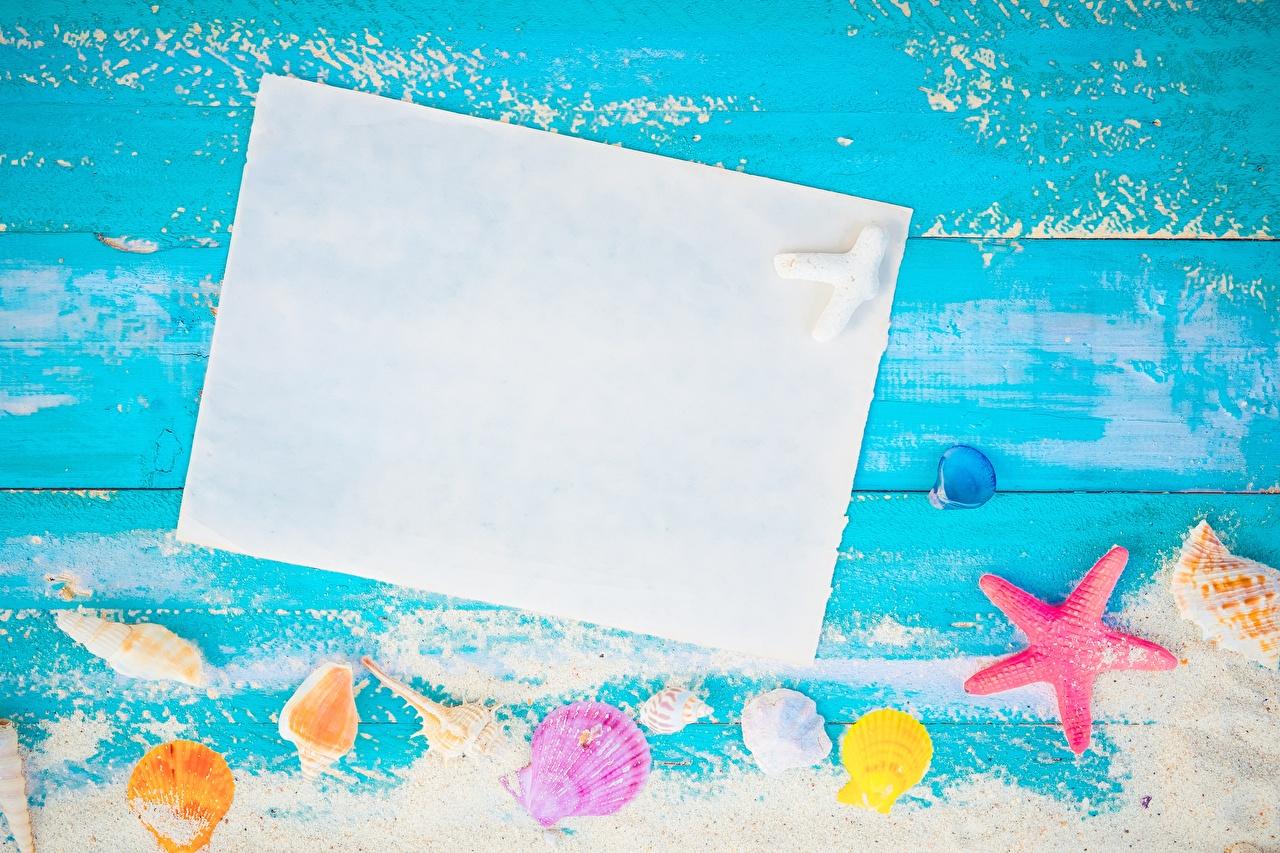 Fotos von Blatt Papier Sommer Muscheln Vorlage Grußkarte
