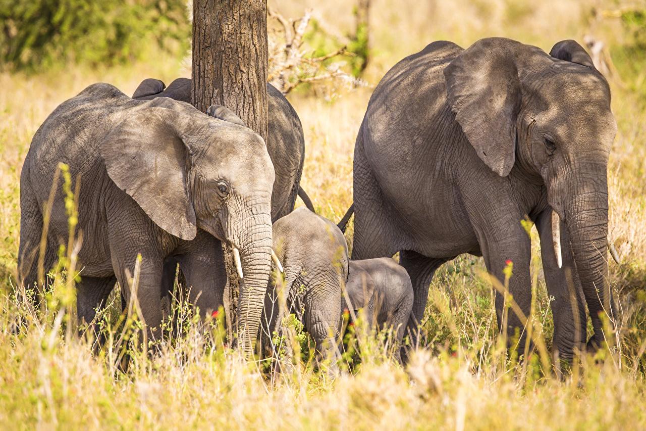 Fonds D Ecran Elephant Petits Animaux Telecharger Photo