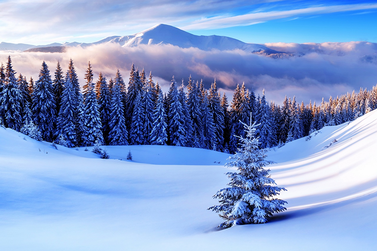 Wallpaper Nature Spruce Winter Mountain Snow Scenery Trees