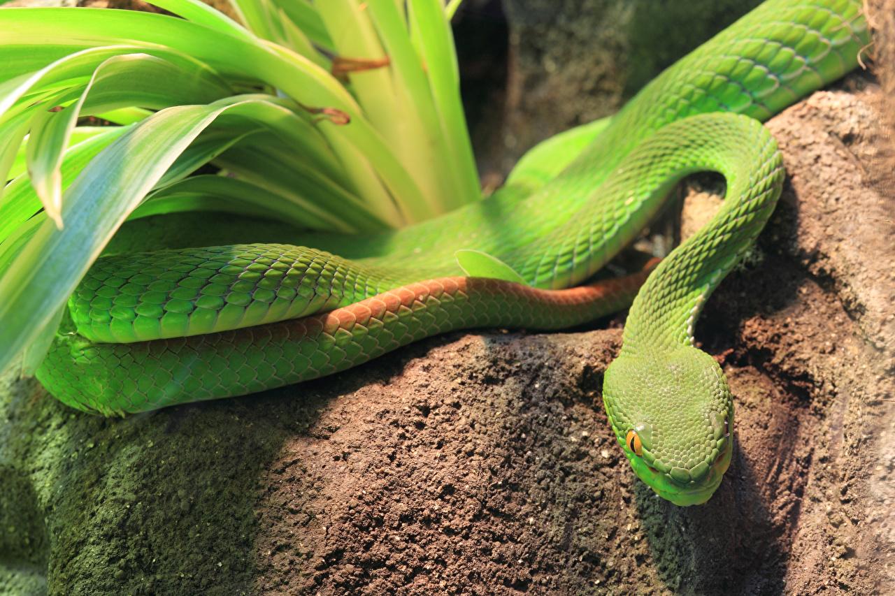 Photo Snakes Green Animals animal