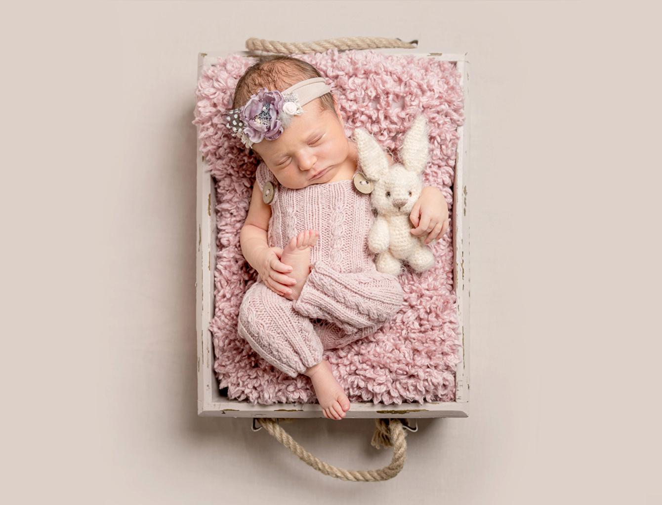 Bilder Hasen Säugling kind Schlaf Farbigen hintergrund Baby Kinder schläft schlafen schlafende schlafendes