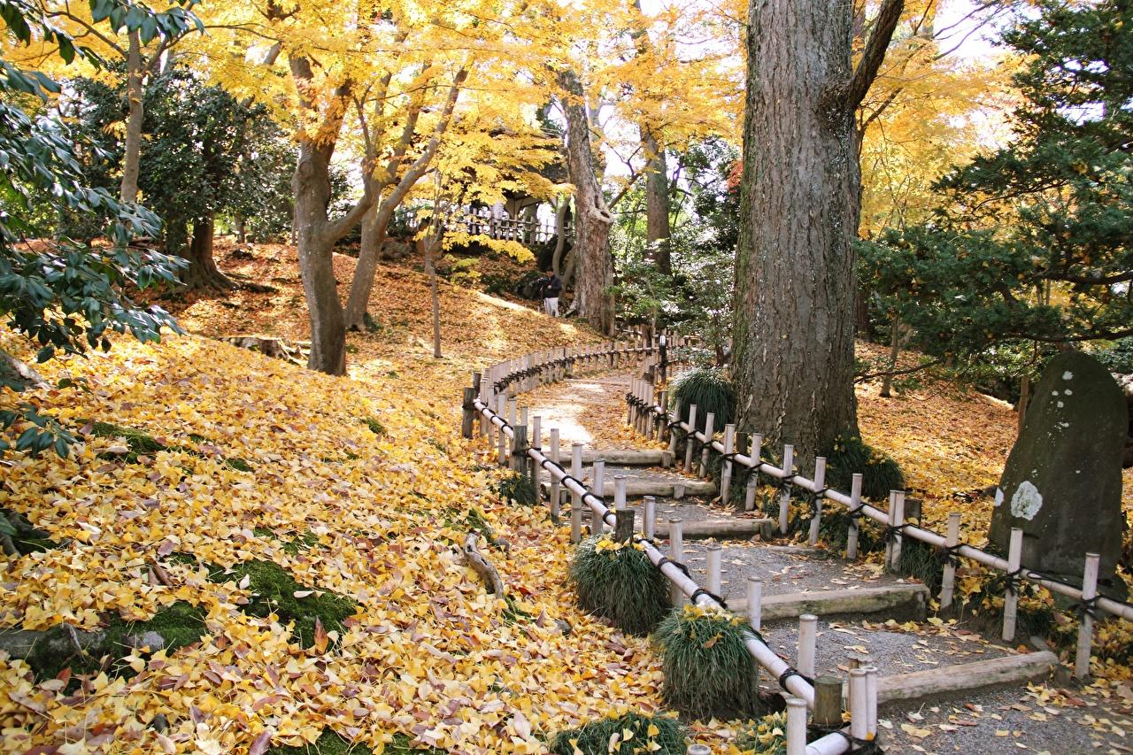 Hintergrundbilder Blatt Japan Kenrokuen Garden, Kanazawa Weg Natur Herbst Park Garten Bäume Blattwerk