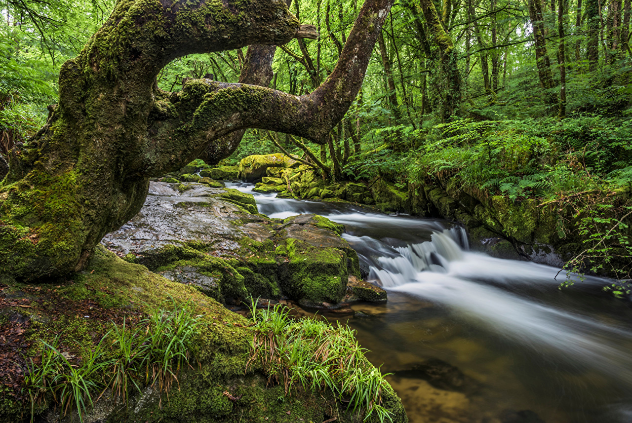 Picture England Cornwall Creek Nature Forests Moss Stones Trees brook Creeks Stream Streams forest stone