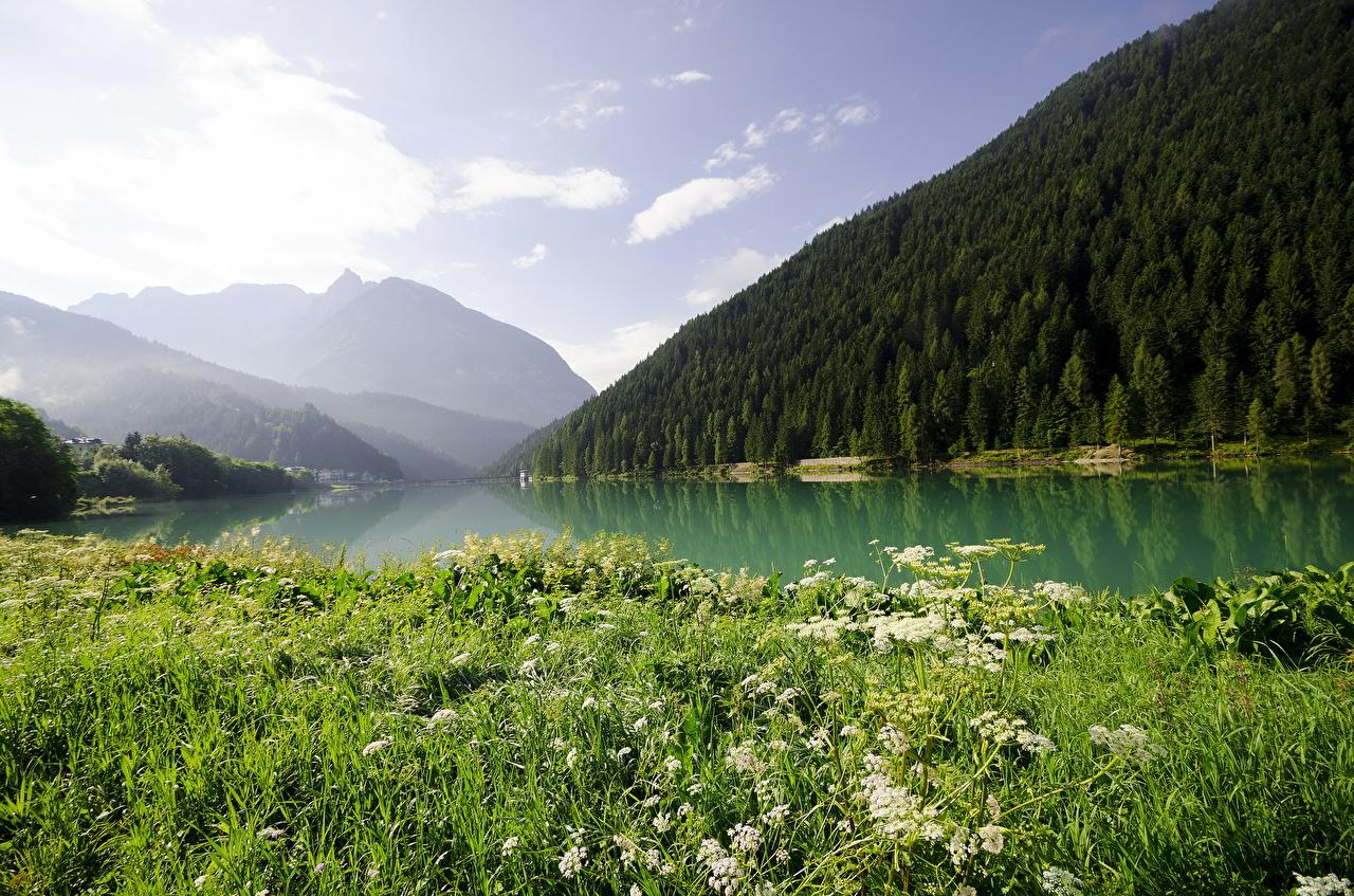 、風景写真、湖、山、森林、草、自然、