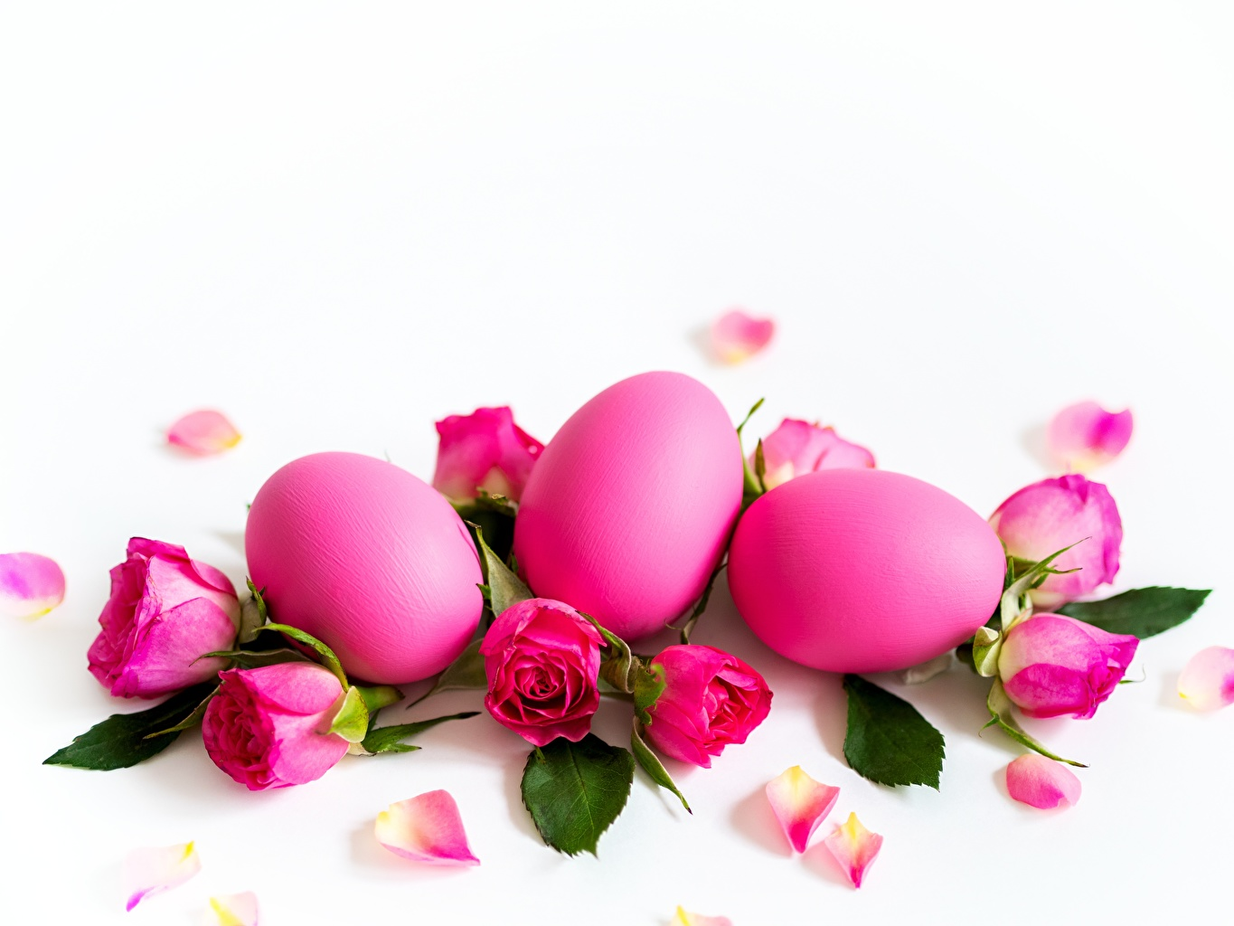 Desktop Wallpapers Easter Eggs Rose Pink Color Flower White