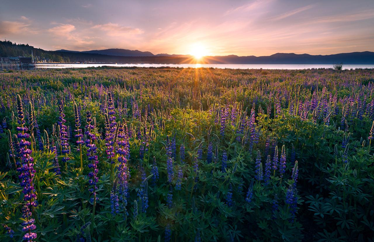 Image Rays of light California USA Lake Tahoe Sun Nature Lupinus Sunrises and sunsets Landscape photography Scenery