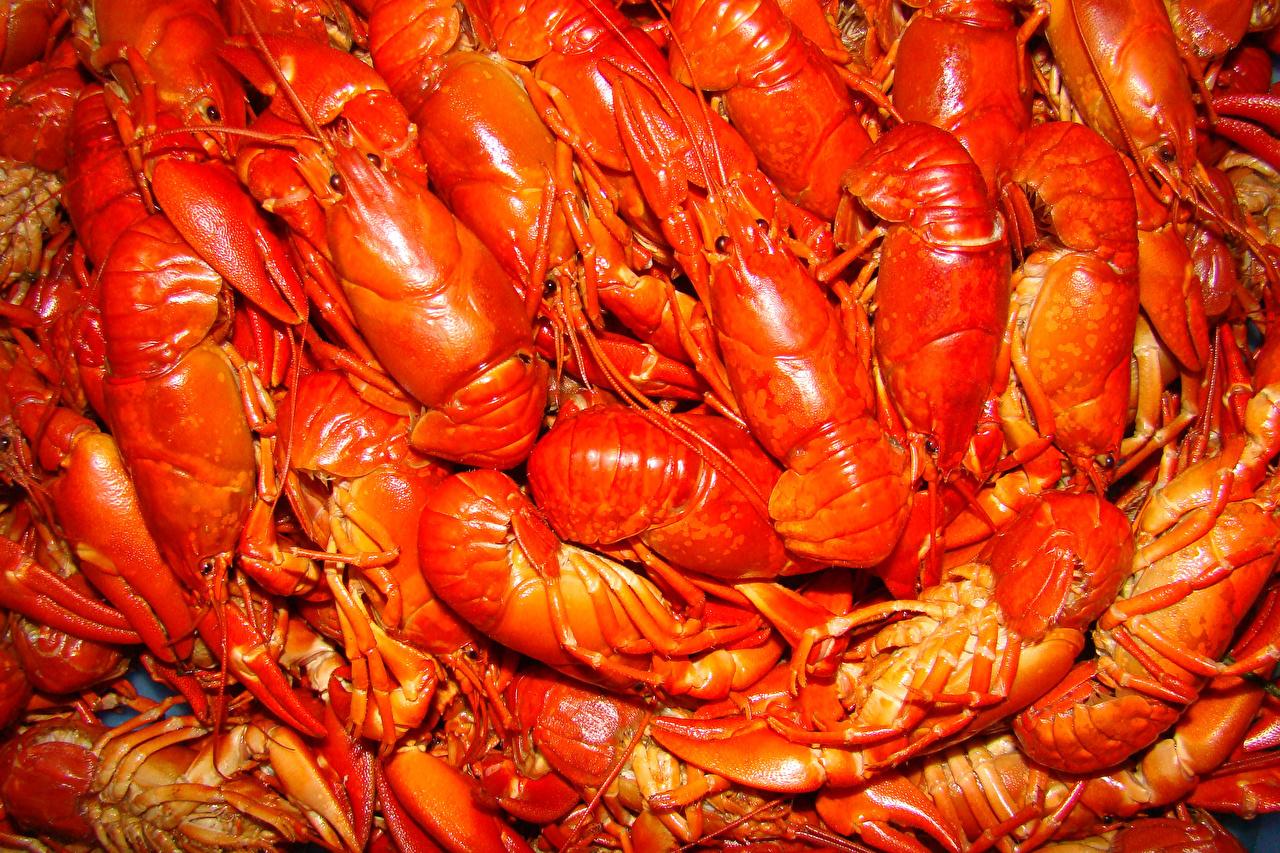 Fotos von Flusskrebs das Essen Viel Meeresfrüchte Lebensmittel