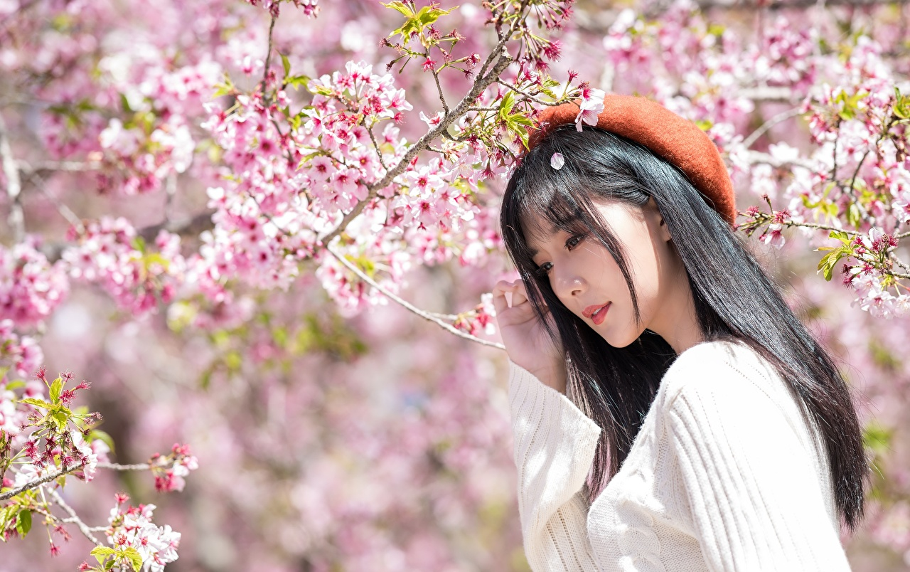 Photo Brunette girl Sakura Beret Girls Asiatic Sweater Branches Flowering trees Cherry blossom female young woman Asian