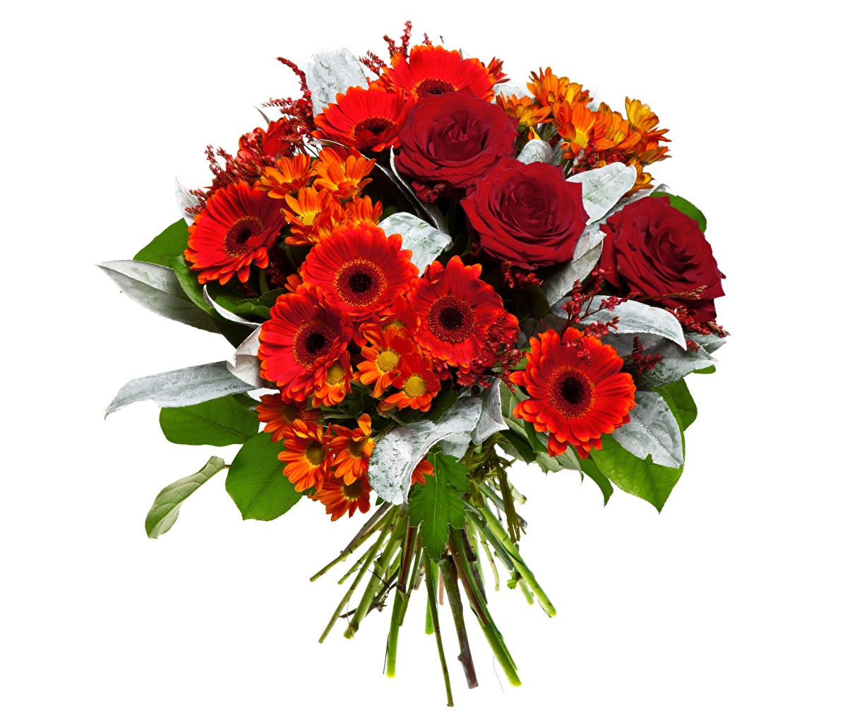 Picture Bouquets Red Roses gerbera flower Chrysanths White background bouquet rose Gerberas Mums Flowers Chrysanthemums
