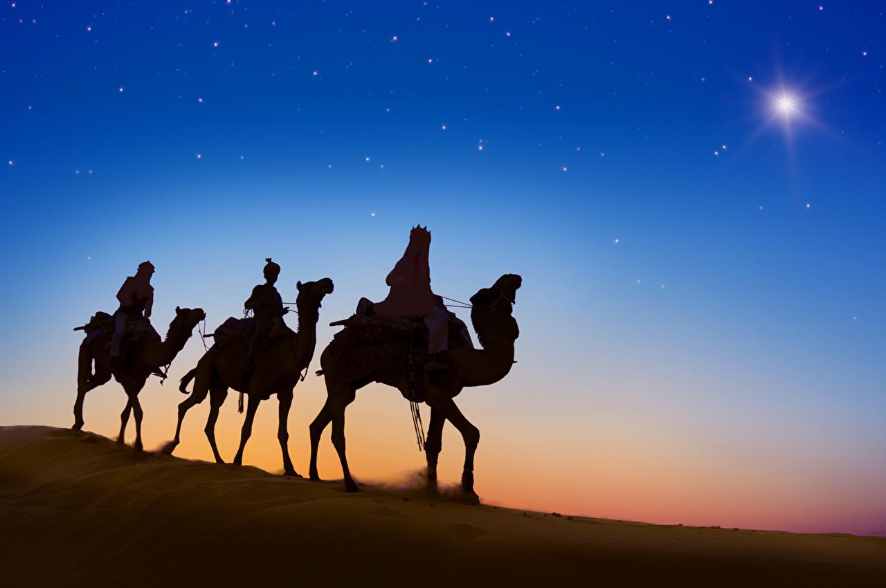 Wallpaper Camels Desert Evening Animals