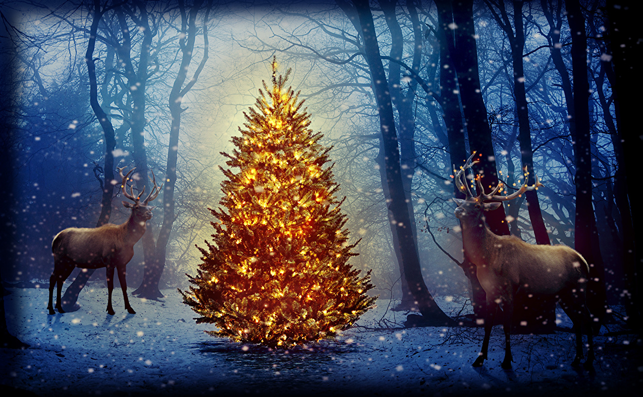 Photo Deer Christmas Winter Nature Snowflakes Christmas Tree Forest