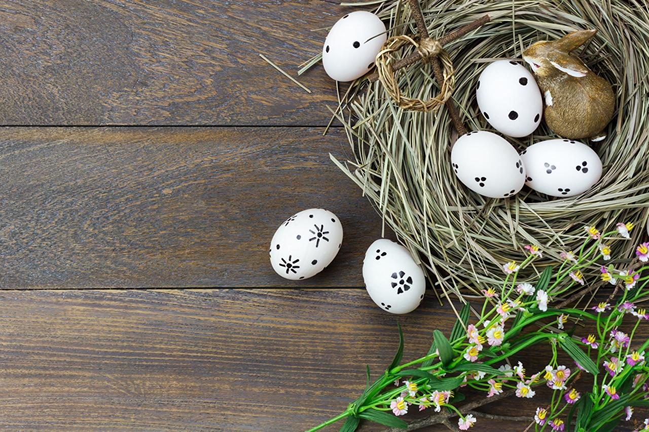 Bilder Ostern Ei Nest Vorlage Grußkarte Bretter eier