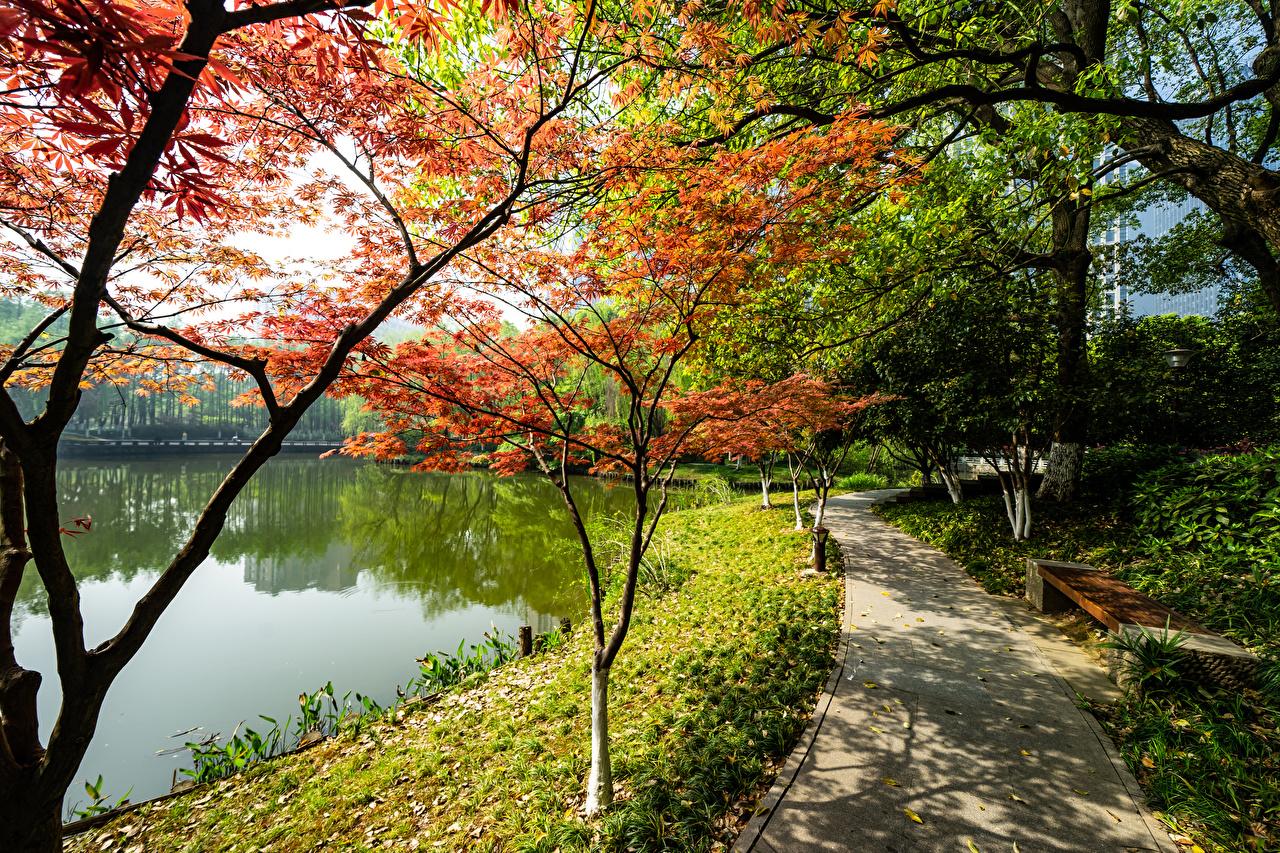 Sfondi Kyoto Cina Natura Lago parchi Alberi Parco