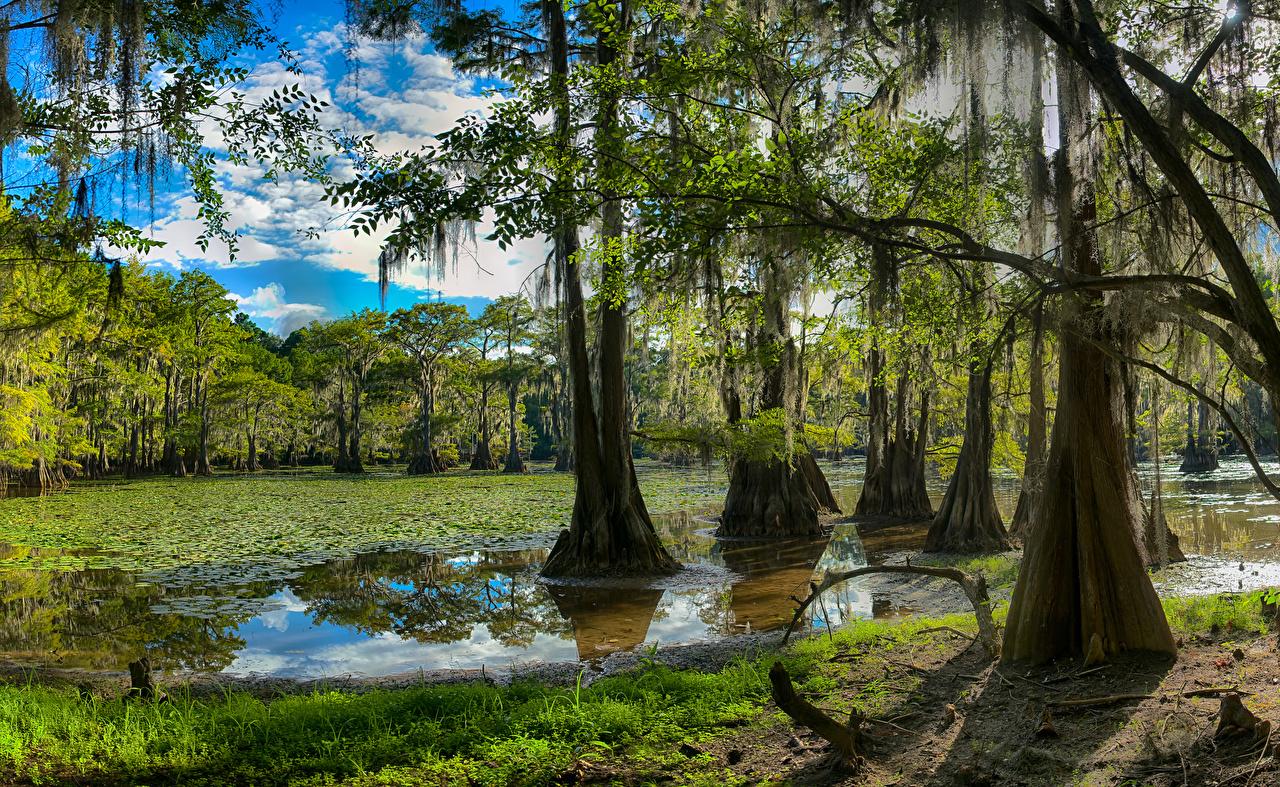 Foto Texas USA Caddo Lake Natur See Wälder Bäume Vereinigte Staaten