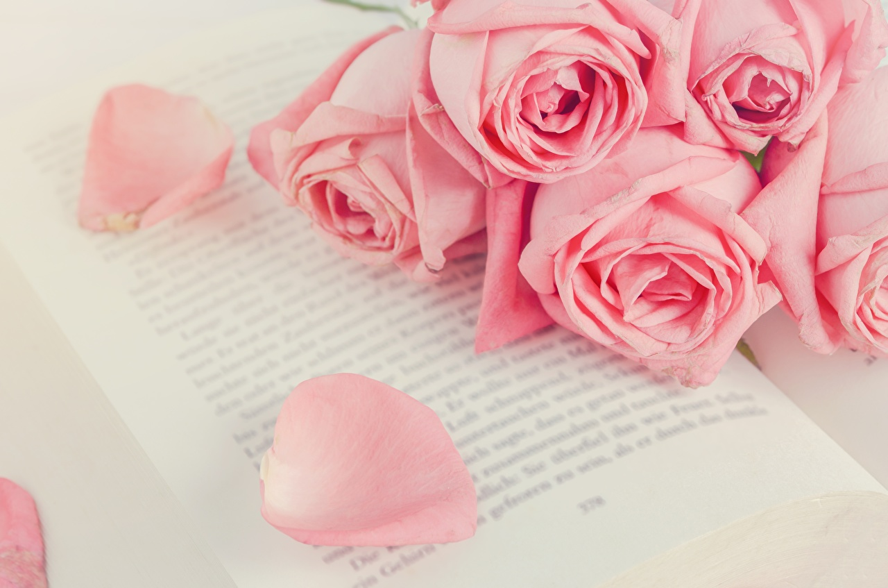 Pictures rose Pink color flower Book Roses Flowers books