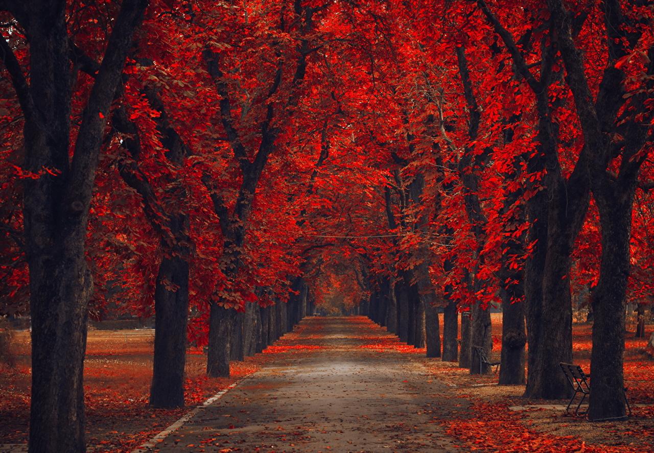Fonds Decran Parc Automne Arbres Allée Rouge Nature