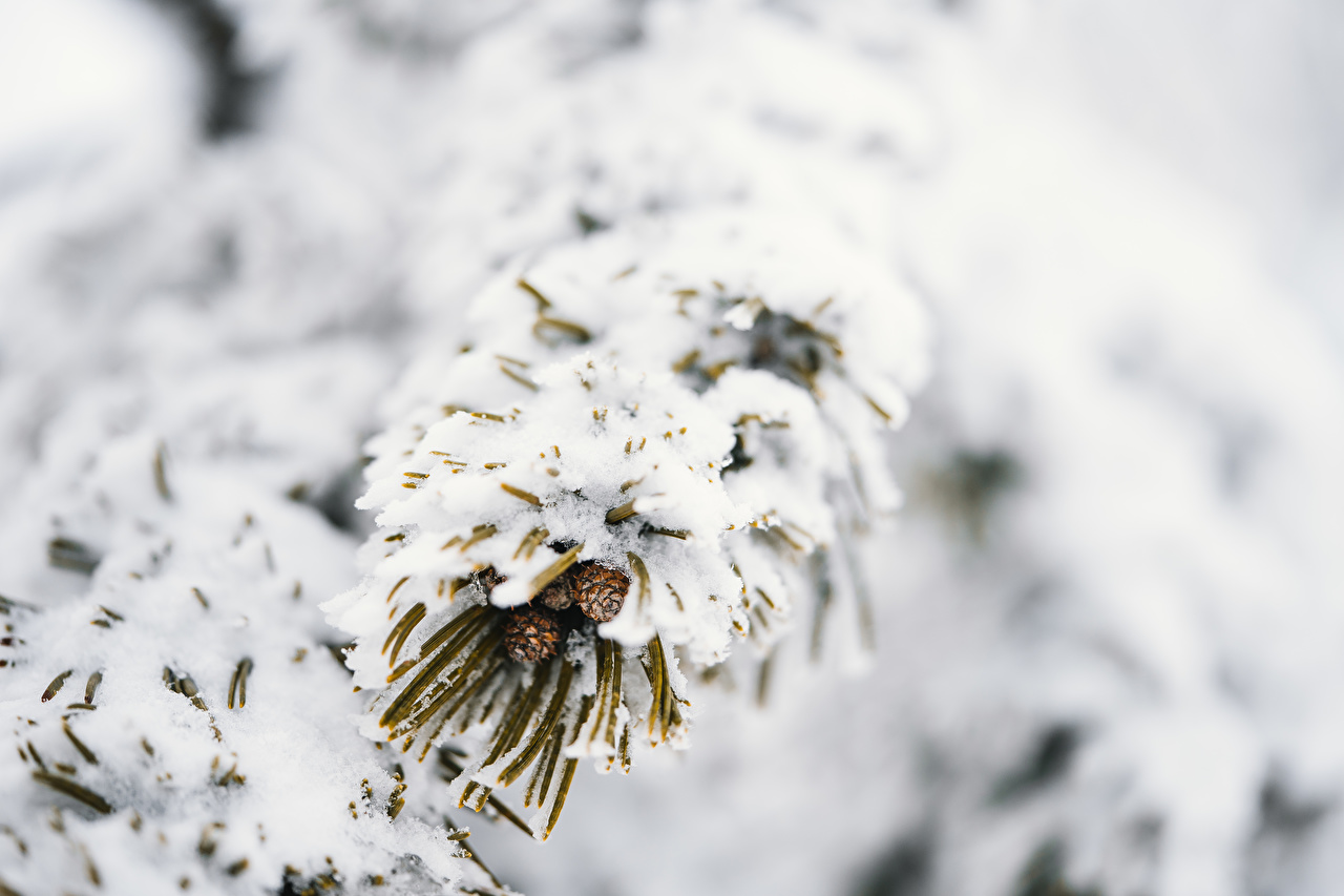 Desktop Wallpapers Bokeh Winter Nature Snow Branches blurred background