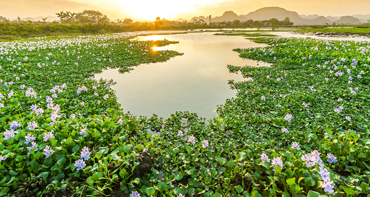 Photo Vietnam Nature Pond flower Nymphaea Sunrises and sunsets Many Flowers Water lilies
