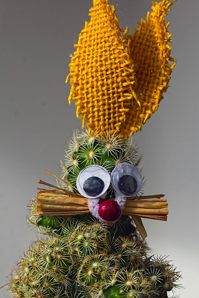 Bilder Kaniner Blommor originella kaktusar Grå bakgrund  till Mobilen kanin blomma kreativ Kreativa Kaktus