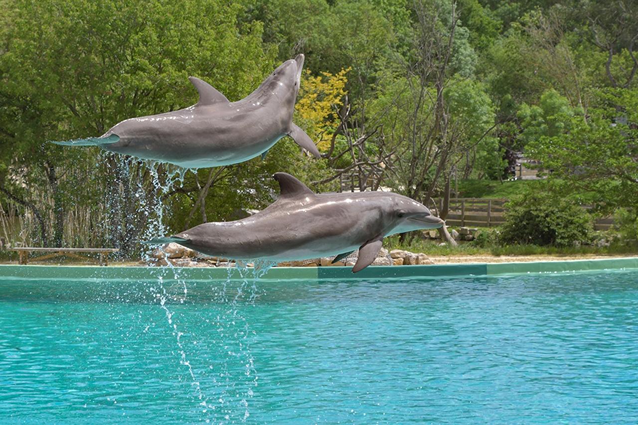 Image Dolphins Two Jump Water splash animal 2 Animals