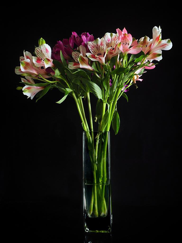 Desktop Hintergrundbilder Blüte Inkalilien Vase Schwarzer Hintergrund  für Handy Blumen Alstroemeria