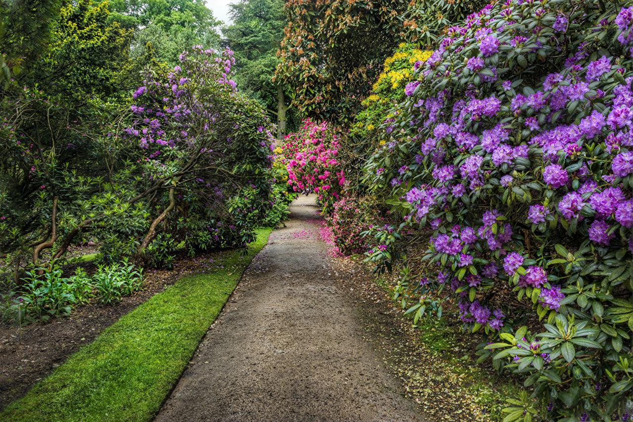 、イギリス、公園、ツツジ、Hare Hill Park Cheshire、低木、自然