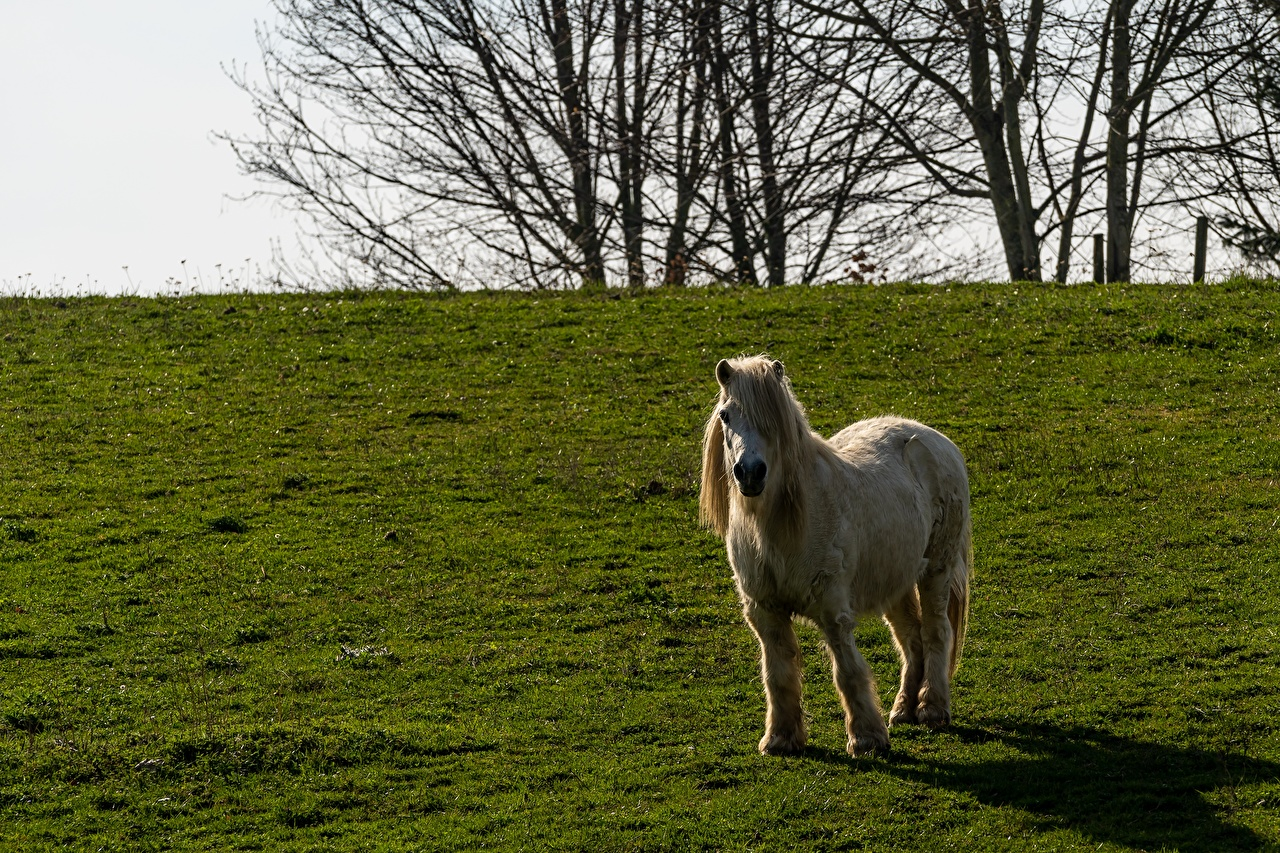Fotos Pony Pferde Gras ein Tier Pferd Hauspferd Tiere