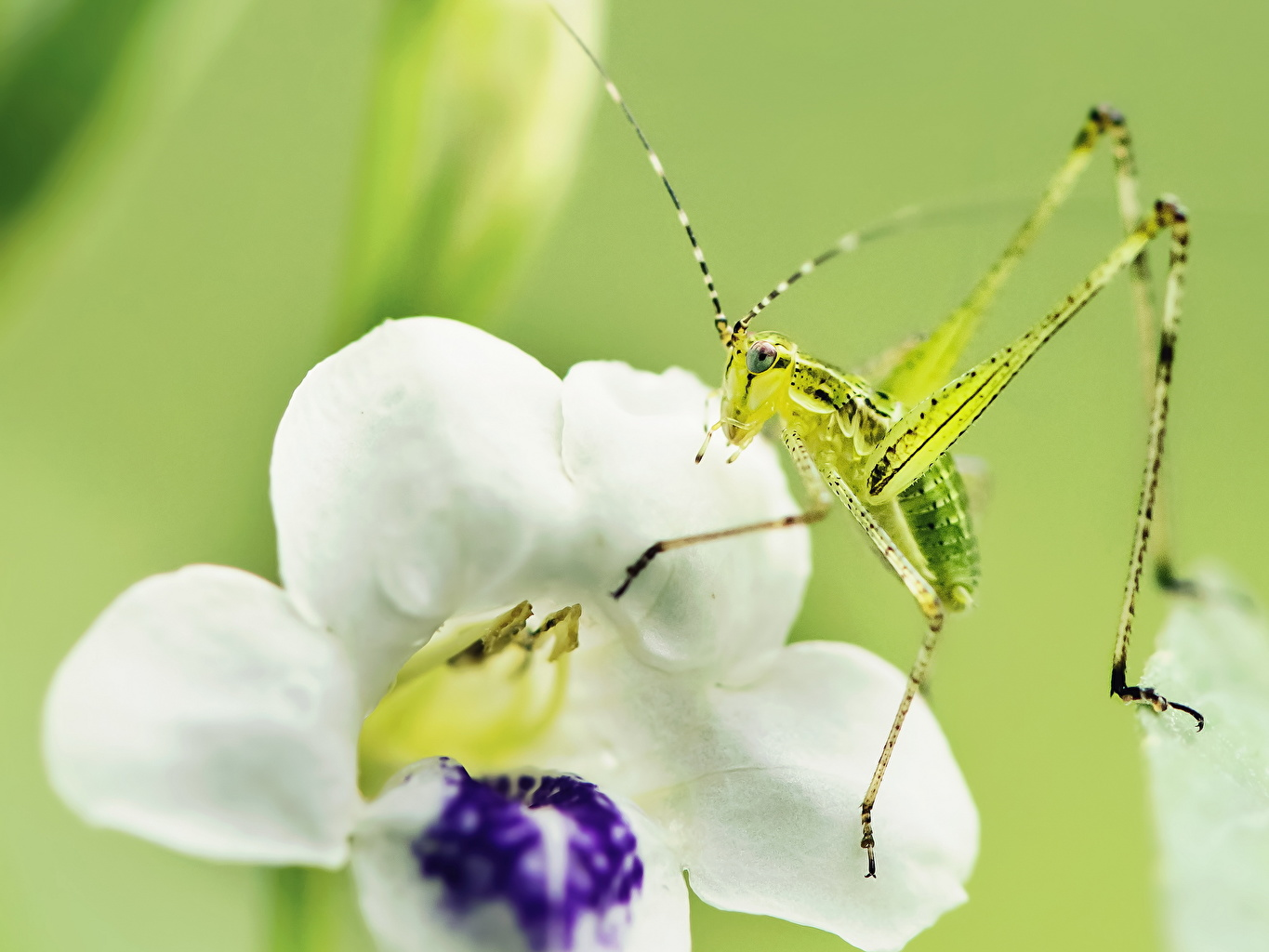 Photos Insects Grasshoppers Closeup Animals animal