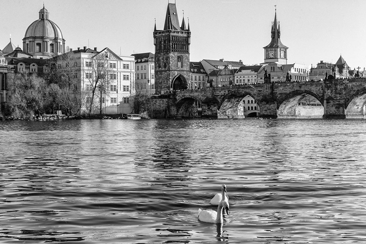 Photo Cities Prague Czech Republic Karluv bridge river Water Charles Bridge Bridges Rivers